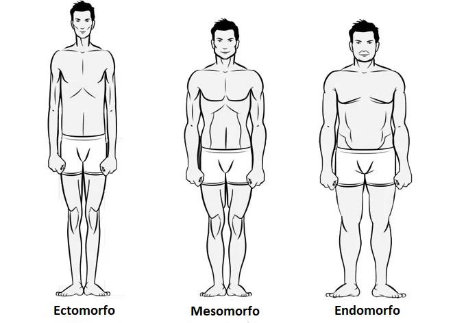 Como identificar biotipo ecto, endo ou mesomorfo