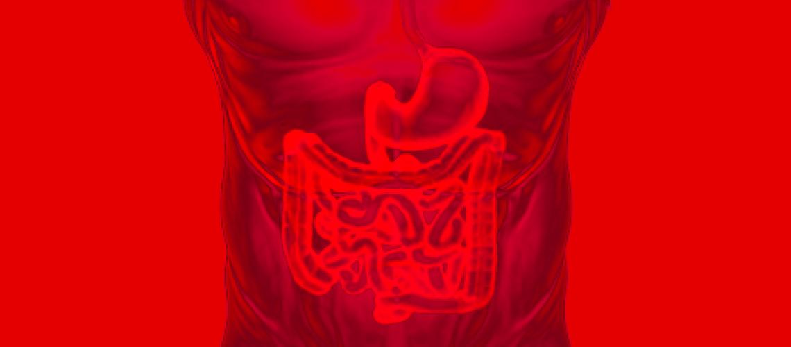 Imagem Destaque Microbiota Intestinal